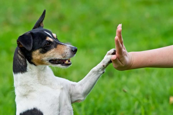 You Need The Training – Not The Dog!
