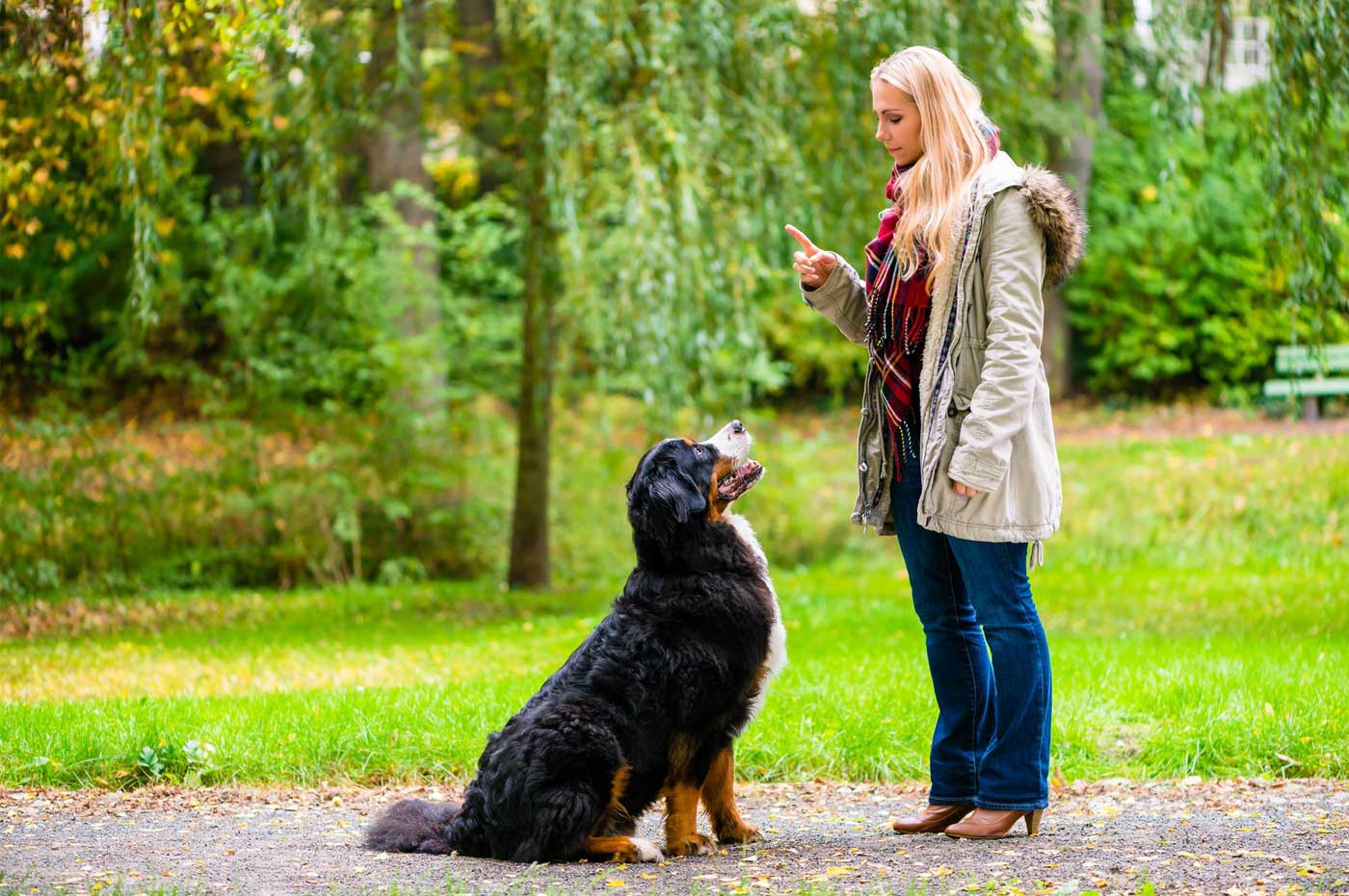 Why Bother With Obedience Training For My Dog?