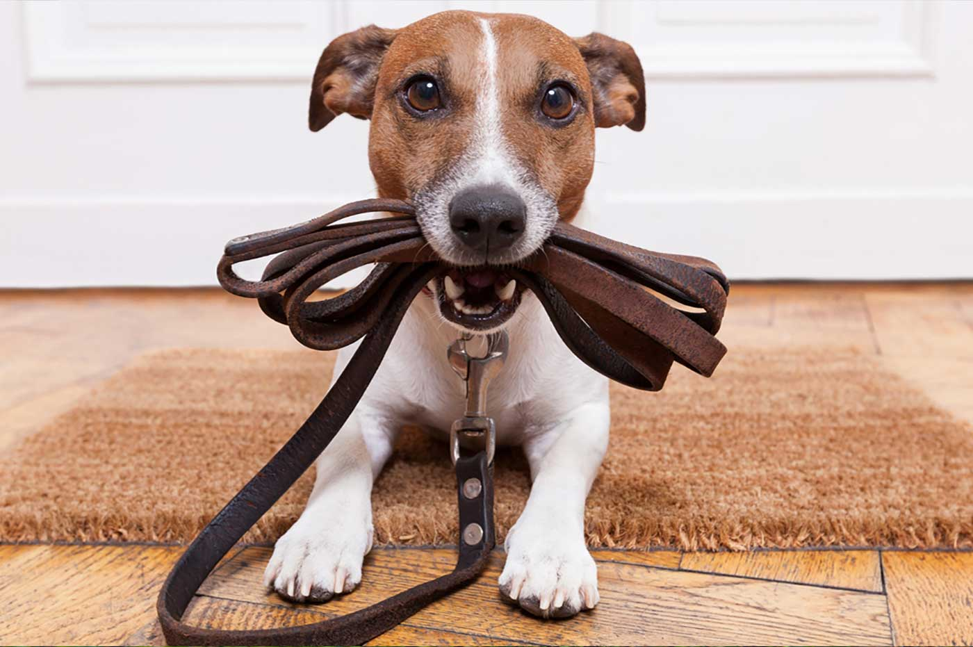 The Value Of Anticipation With Dog Training