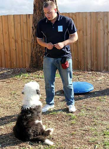 Chris Loverseed – Melbourne Dog Trainer