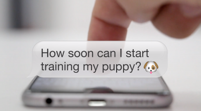How soon can I start training my puppy?