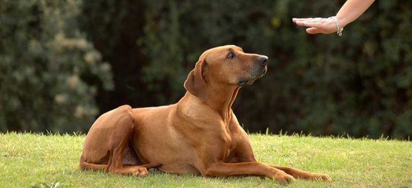 Dog Training in Templestowe, Melbourne